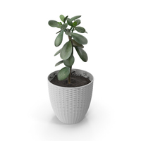 Money Tree PNG & PSD Images