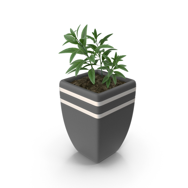 Plant In Plot PNG & PSD Images