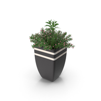Plant In Pot PNG & PSD Images