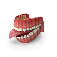 Human Gums Teeth and Tongue PNG & PSD Images