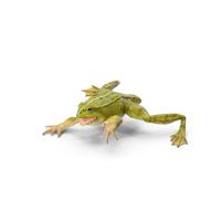Froglet PNG & PSD Images
