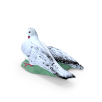 Dove PNG & PSD Images