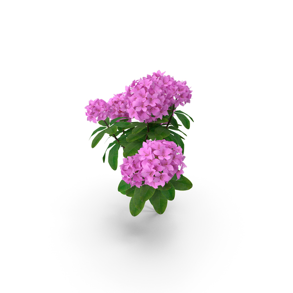 Purple Rhododendron Branch PNG & PSD Images