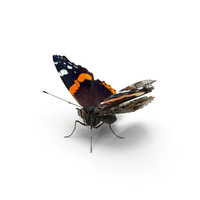 Red Admirable Butterfly PNG & PSD Images