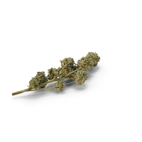 Cannabis Branch PNG & PSD Images