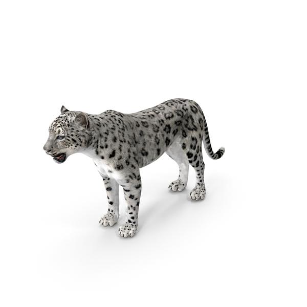 Snow Leopard PNG & PSD Images