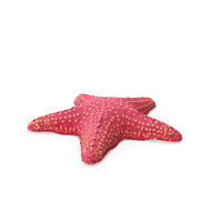 Pink Starfish PNG & PSD Images