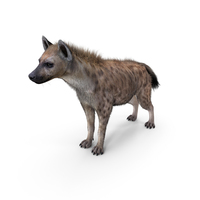 Hyena Neutral Pose PNG & PSD Images