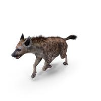 Hyena Running Pose PNG & PSD Images