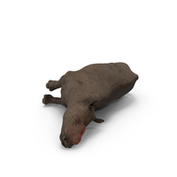 Dead Rhino PNG & PSD Images