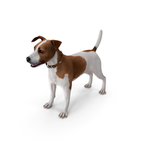 Spotted Jack Russell Terrier PNG & PSD Images