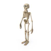 Cartoon Skeleton PNG & PSD Images