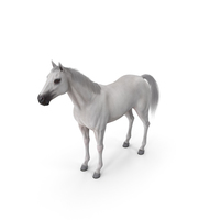 White Horse Fur PNG & PSD Images