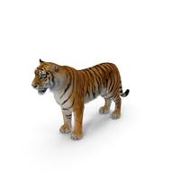 Tiger PNG & PSD Images