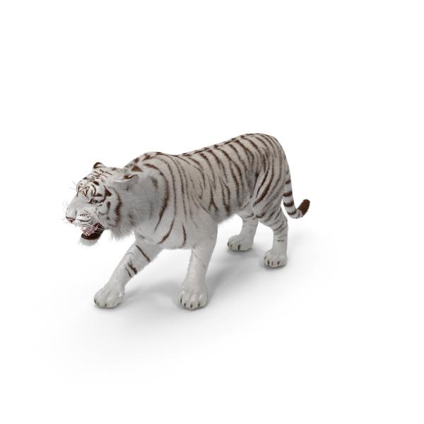 White Tiger Roar PNG & PSD Images