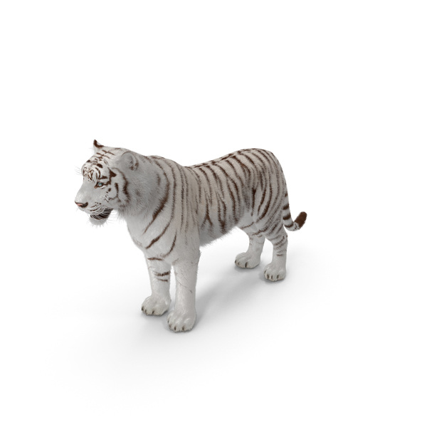 White Tiger PNG & PSD Images
