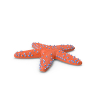 Knobby Starfish PNG & PSD Images