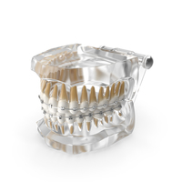 Transparent Dental Typodont Teeth Model With Braces PNG & PSD Images