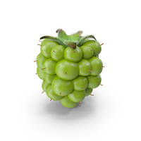 Unripe Green Blackberry PNG & PSD Images