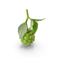 Unripe Green Blackberry with Leaves PNG & PSD Images