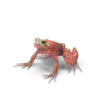 Frog Anatomy Complete Body PNG & PSD Images