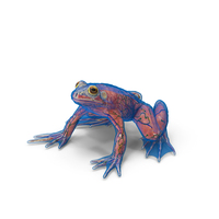 Frog Anatomy Complete Body Transparent Skin PNG & PSD Images