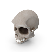 Stylized Cartoon Skull PNG & PSD Images