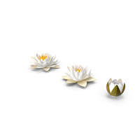 European White Water Lily Nymphaea Alba Set PNG & PSD Images