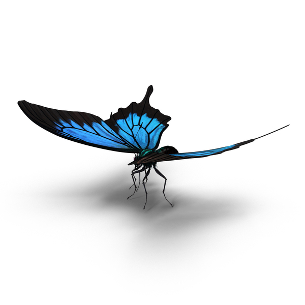 Papilio Ulysses Butterfly Object