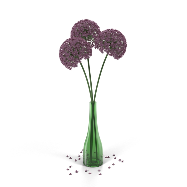 Allium Flowers in Vase PNG & PSD Images