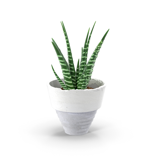 Aloe in Pot PNG & PSD Images