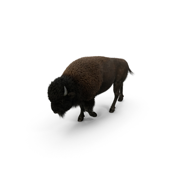 American Bison PNG & PSD Images