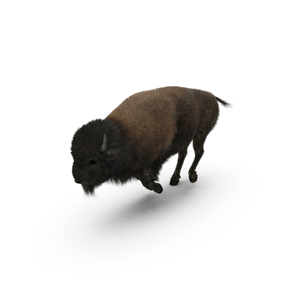 American Bison Running Object