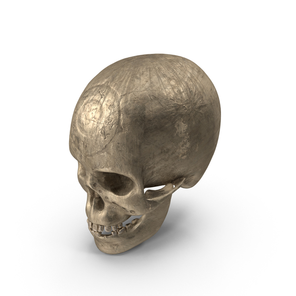 Ancient Skull PNG & PSD Images