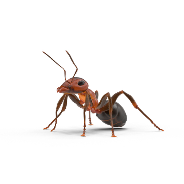 Ant PNG & PSD Images