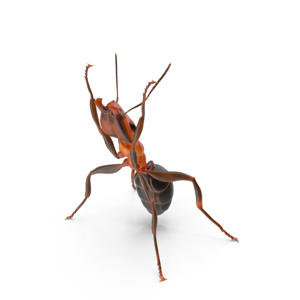 Ant Holding Pose PNG & PSD Images