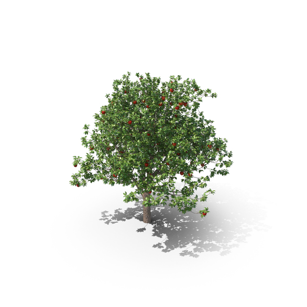 Apple Tree PNG & PSD Images