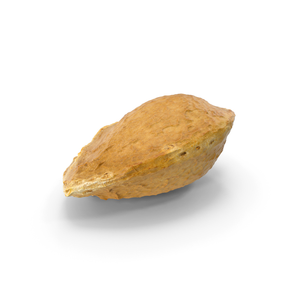 Apricot Seed PNG & PSD Images