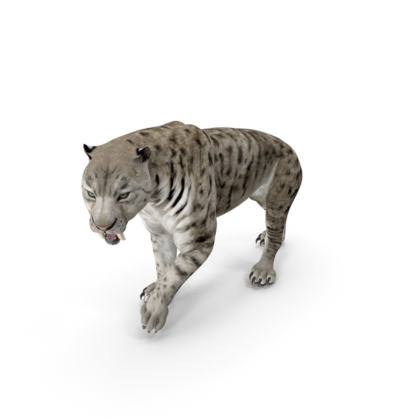 Arctic Saber Tooth Cat Walking Pose PNG & PSD Images
