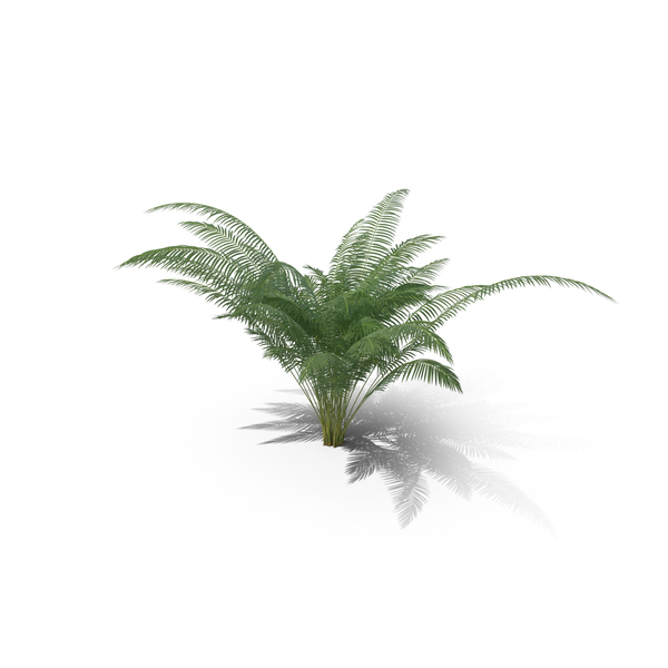 Tree: Areca Palm Small PNG & PSD Images