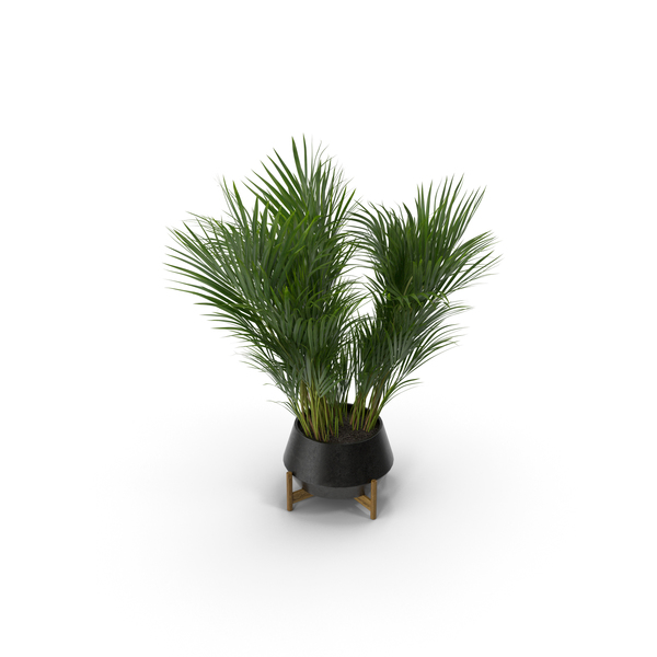 Tree: Areca Palm PNG & PSD Images