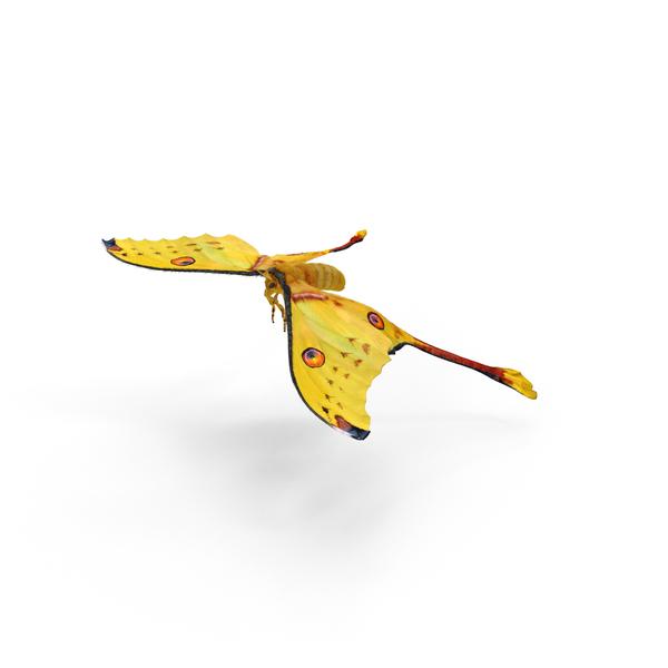 Moth: Argema Mittrei PNG & PSD Images