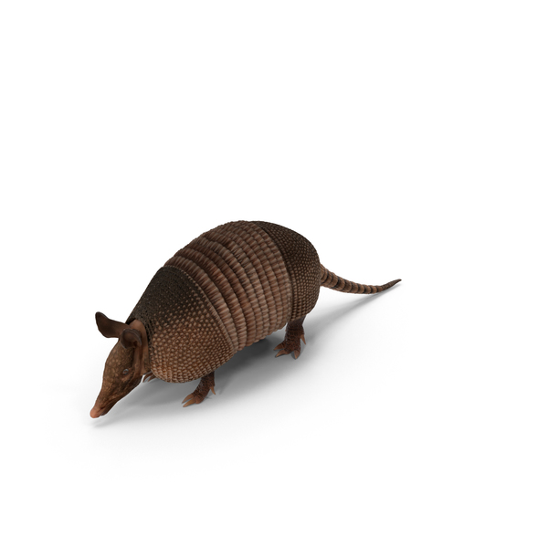 Armadillo PNG & PSD Images