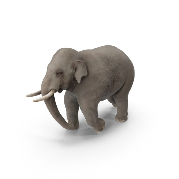 Asian Elephant PNG & PSD Images