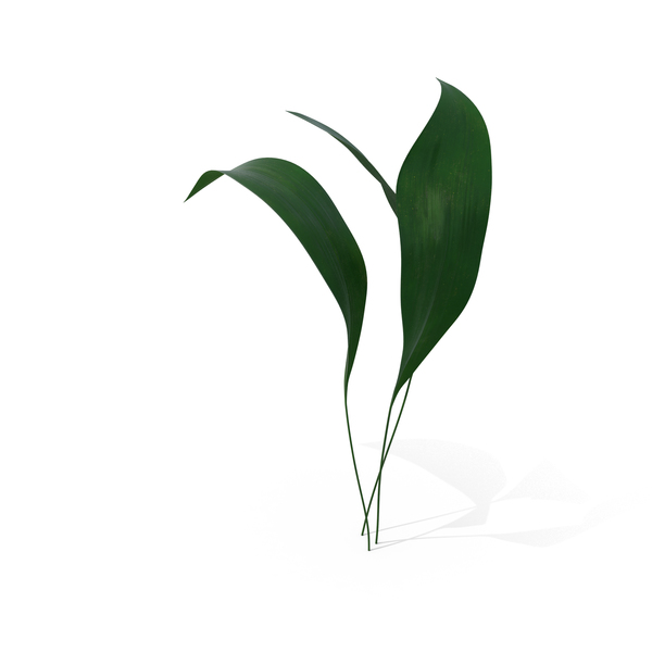 Ikebana PNG Images & PSDs for Download | PixelSquid