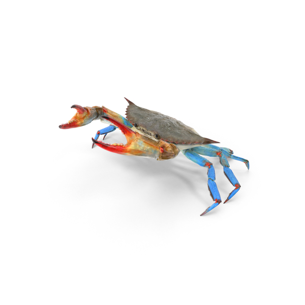 Atlantic Blue Crab PNG & PSD Images