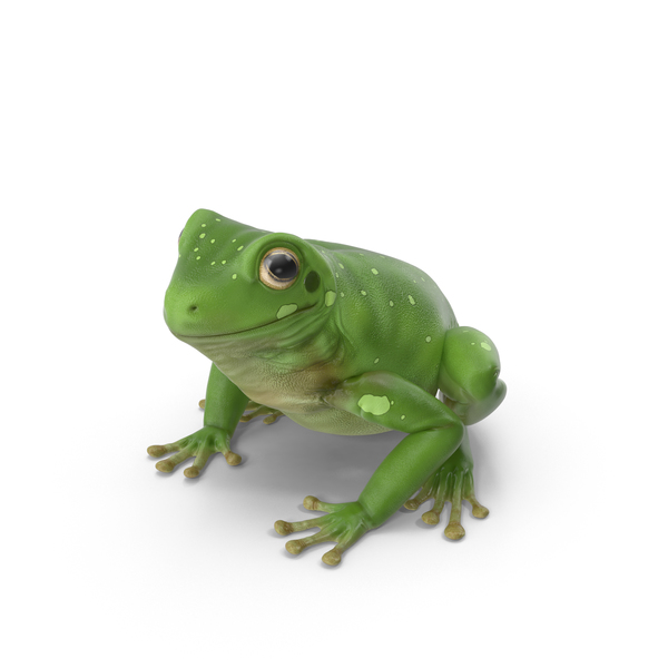 Australian Green Tree Frog Object