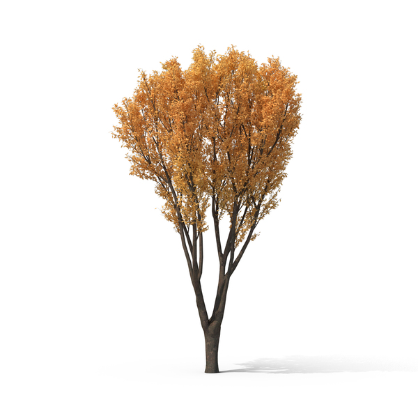 Shrub: Autumn Bush PNG & PSD Images