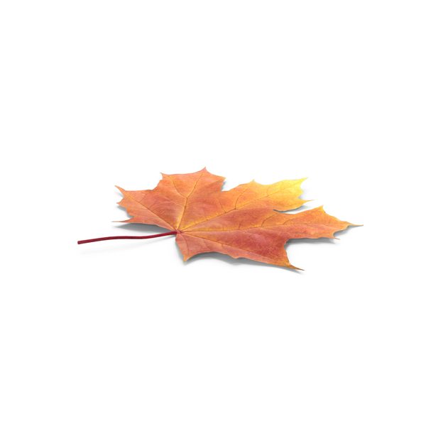 Autumn Maple Leaf PNG & PSD Images