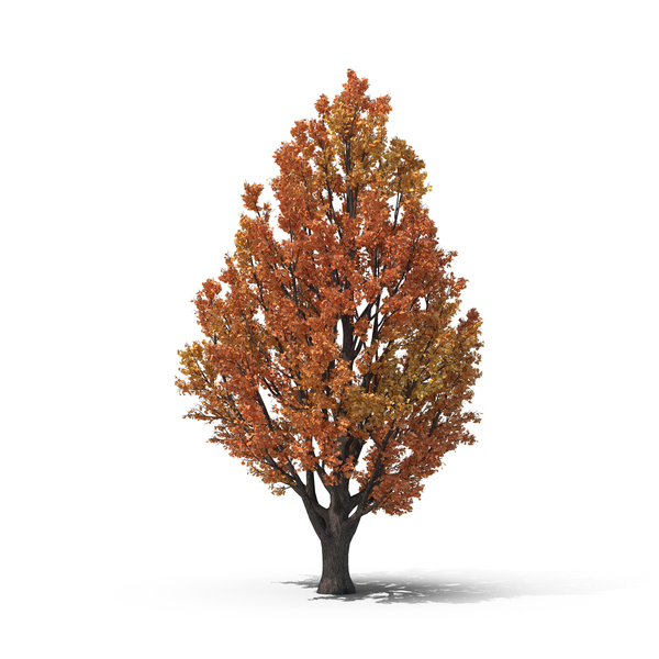 Autumn Tree PNG & PSD Images